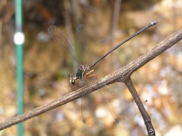 Foto: Kelompok Entomologi Papua ©