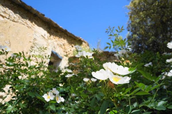 Bloemen met op de achtergrond een stukje van de oude berghut