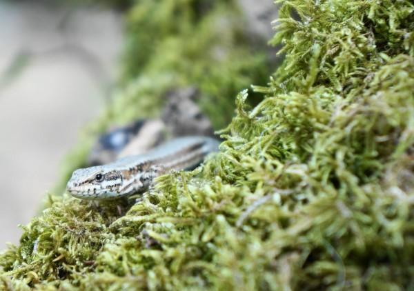 Camping Berge Ombragée salamander